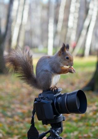 Белка ест орех на рюкзак и камеры в фоновом режиме