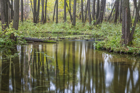 riverbed: The riverbed Pekhorka in alder grove, Elk Island National Park