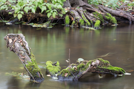 snag: Snag covered with moss in a riverbed Pekhorka Stock Photo