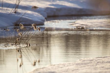 origins: The origins of the river Pekhorka Elk Island, Balashikha