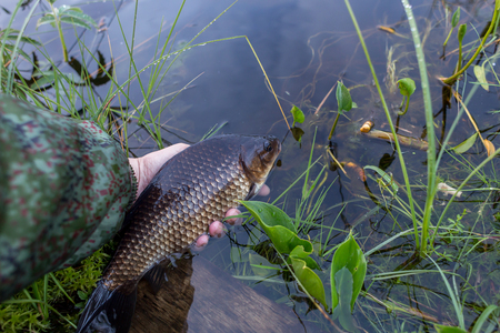 The fisherman lets out the crucian in the lake Stock Photo