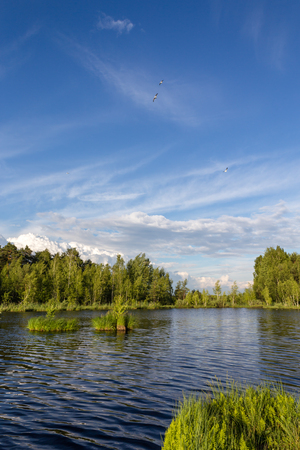 Летний пейзаж на озере Козлово