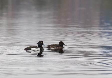 Женатая пара, черная на воде под дождем