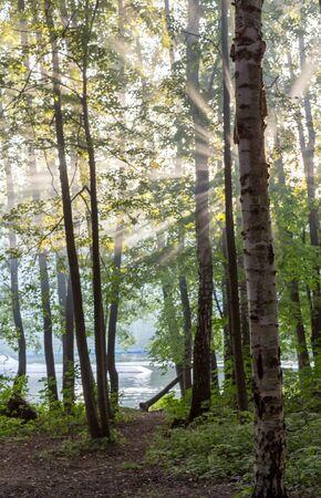 Солнечные лучи пробираются сквозь листву деревьев в осенний лес