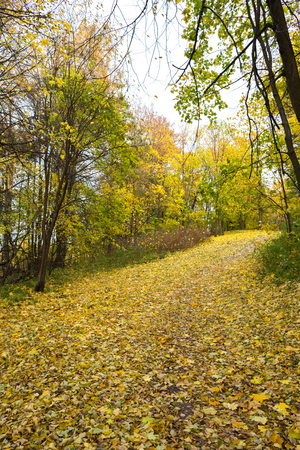 Autumn paths in the estate Pehra-Yakovlevskoe, Balashikha
