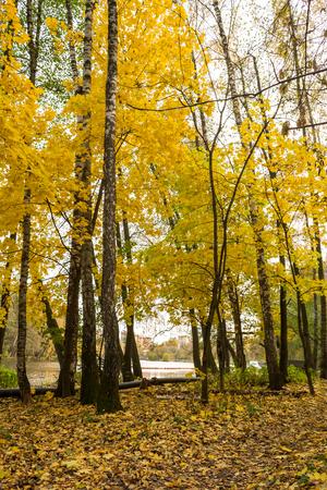 Autumn paths on the bank of the river Pekhorki, Balashikha