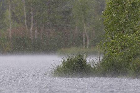 Strong summer rain on the lake Фото со стока