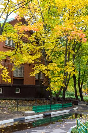 Autumn city courtyard with yellow maples in Balashikha