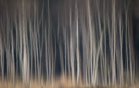 Abstract reflection of birches in lake water