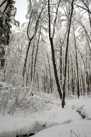 Winter landscape after a heavy snowfall with snow-covered trees in the frosty sunny day 版權商用圖片
