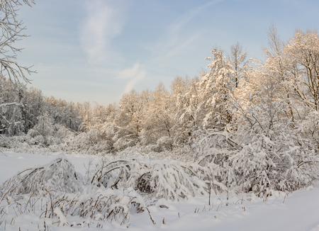 Winter landscape after a heavy snowfall with snow-covered trees in the frosty sunny day Фото со стока