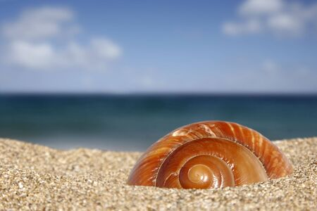 Close up of conch on sandy beach with sky background