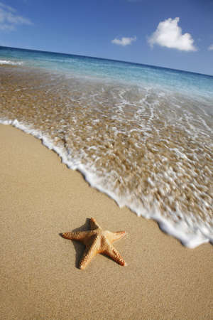 Starfish on tropical beach with waving coming towards it photo