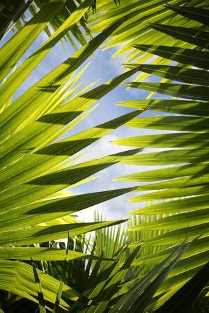 Rétroéclairé jungle avec des feuilles bleu ciel visible Banque d'images - 1364394