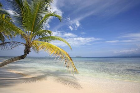 Perfect tropical beach with overhanging palm tree and beautiful blue sky