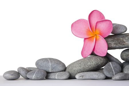 Stack of pebbles and pink frangipani flower with white background