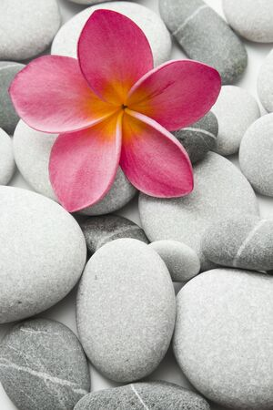 Nice calm image of beach pebbles with a single pink frangipani flower Stock Photo