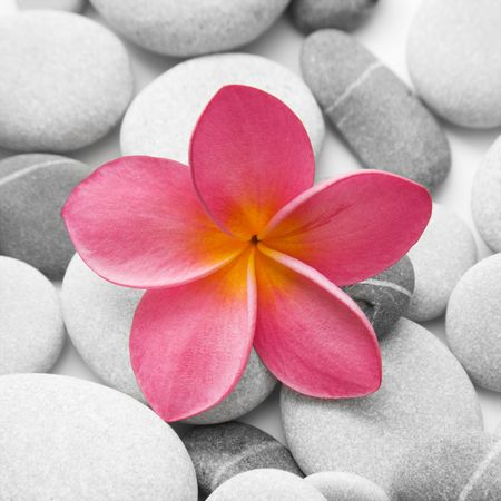 Nice calm image of beach pebbles with a single pink frangipani flower