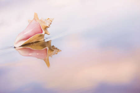 Conch shell on the sand with reflections and pink sunset hues. photo