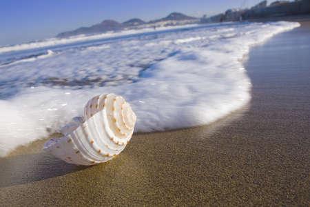 gran canaria: Sea shell in de zone surf op Las Canteras strand op Gran Canaria.