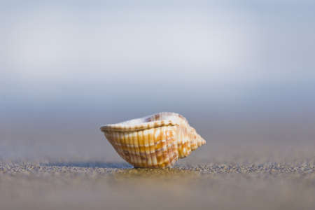 upturned: Small seashell upturned on the beach Stock Photo