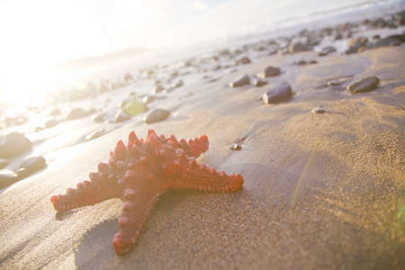 Orange seastar on the beach. Stock Photo - 9313561
