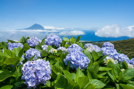 The Island of Pico - Azores - Portugal