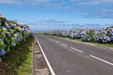 Country road with hydrangeas 版權商用圖片