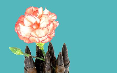 Bullets and a flower isolated on blue