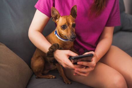 Close-up of a Mini Pinscher dog sitting next to a young woman who is watching the news on her smartphone Archivio Fotografico