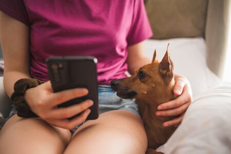 Close-up of a mini pinscher dog being petted by a young woman while reading news on her smartphone