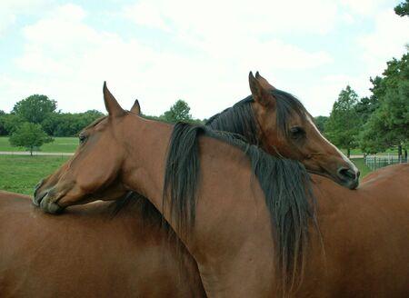 2 頭の馬が絡み合って