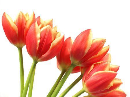 春チューリップ花束