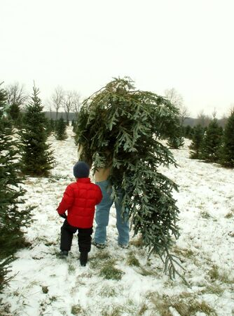 farm boys: bringing home Christmas tree
