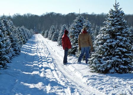 Christmas tree couple Stock Photo