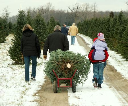 cut: Christmas tree family