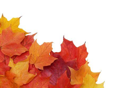 左下隅でカラフルな秋の紅葉