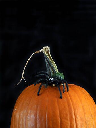 orange pumpkin with a spider for Halloween