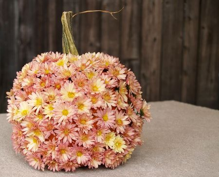 a pumpkin decorated with mums as a fall outdoor centerpiece