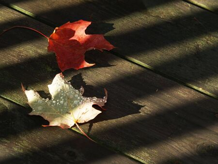 dew covered fallen leaves on a wooden deck Stock Photo