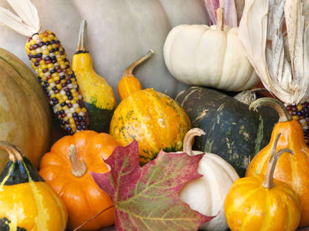 an assortment of fall squash, pumpkins, gourds and leaves Stock Photo