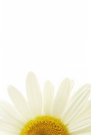 a close-up of a single yellow-centered white daisy Stock Photo