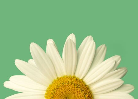 a close-up of a yellow-centered white daisy over green