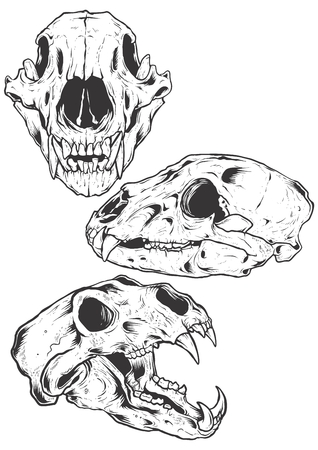 Bear Skulls vector illustration Illustration