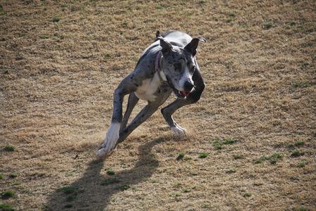 running dog Stock fotó - 88673015