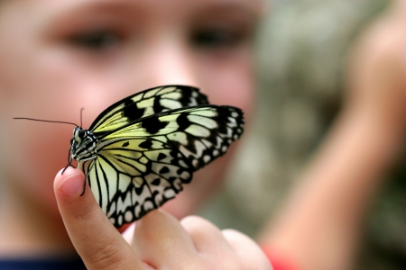 Selective focus picture of a butterfly on a child's finger. 스톡 콘텐츠