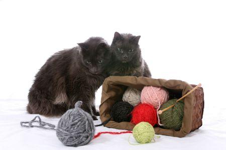 overturn: Due gatti neri guardando uno rovesciato paniere di filati.