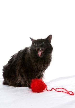 hiss: Fluffy black cat with mouth open next to a ball of yarn.  Cat looks evil.
