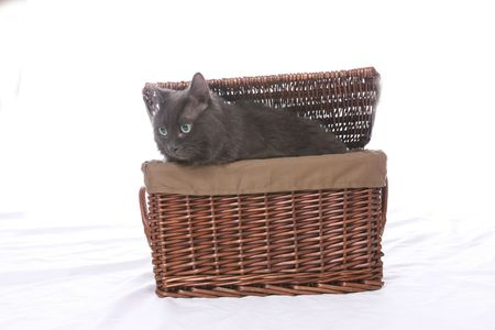 black cat coming out of a wicker basket