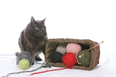 mess: cat knocked over knitting basket